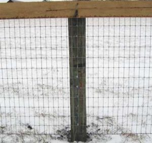 This picture shows the 2X4 wire a little more clearly. As you can tell it is safe like V mesh wire, but what you can't see is the price, which is much cheaper than V mesh fence.