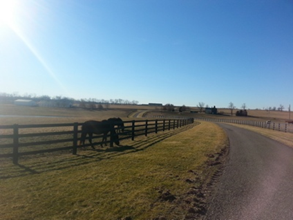Kentuckiana was one of the first major farms in KY to install Centaur fence, the fence here is about 18 years old and all that has been done with it was some post repairs about 6 years ago. Other than that, nothing has been done to the farm.