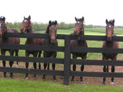 Raceland Farm